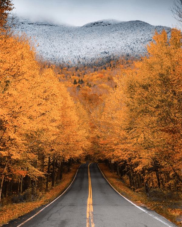 A two lane road disapears into the distance under a canopy of golden orange trees with snowy evergreens on montains in the distance.